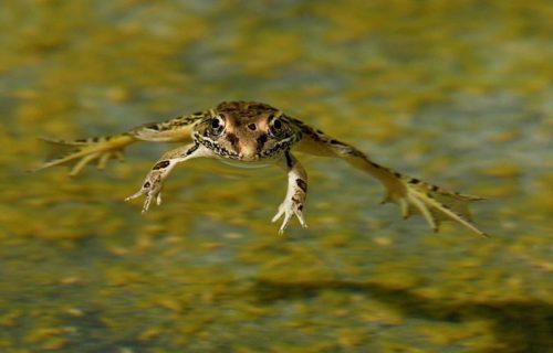 Интересные факты из жизни лягушек