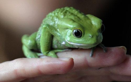 Пять фактов, после которых вы никогда не перепутаете жабу с лягушкой