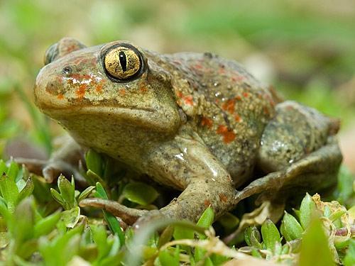 Самые удивительные лягушки на планете. Часть 1. МУзей ЛЯгушек и Жаб