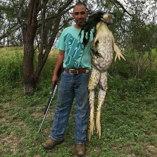 Американец поймал гигантскую лягушку