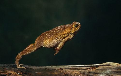 Как лягушки прыгают