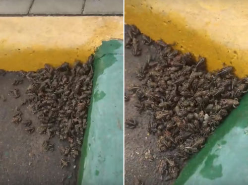 Воронеж атаковала стая нецелованных царевен-лягушек